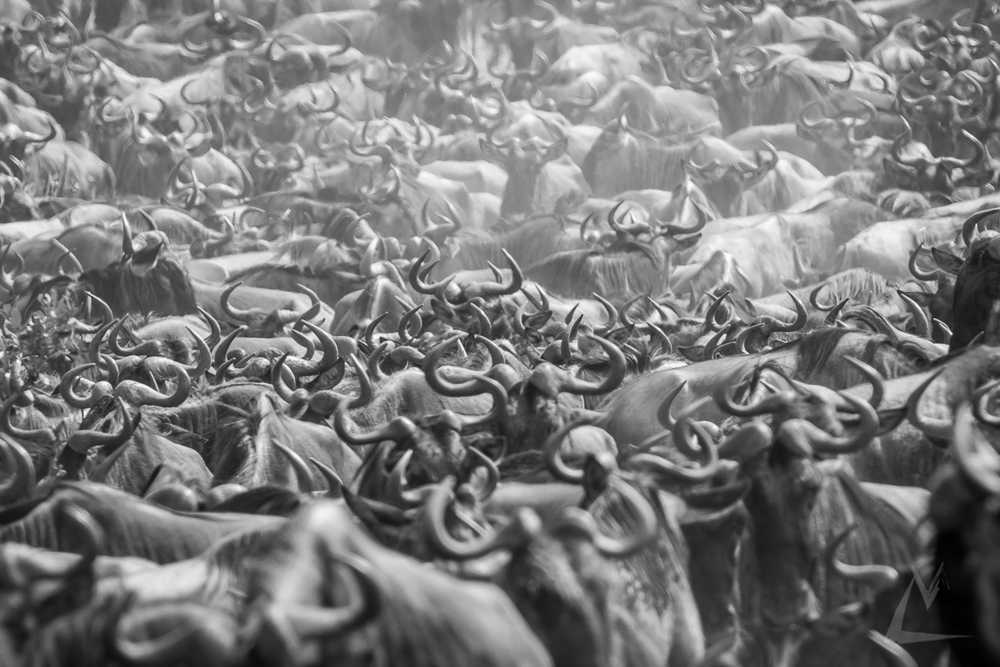 20150801_Masai_Mara_629-1.jpg