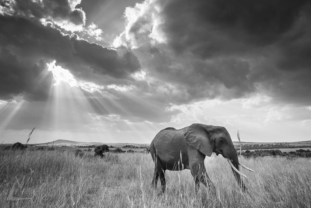 20150805_Masai_Mara_2101-1.jpg