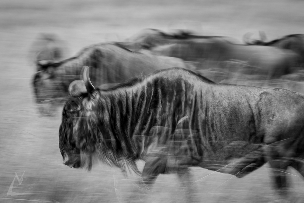 20150803_Masai_Mara_1359-1.jpg