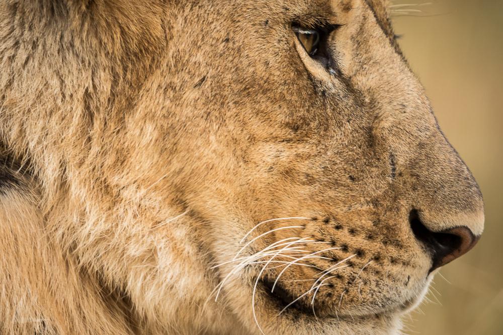 20150806_Masai_Mara_2403-1.jpg