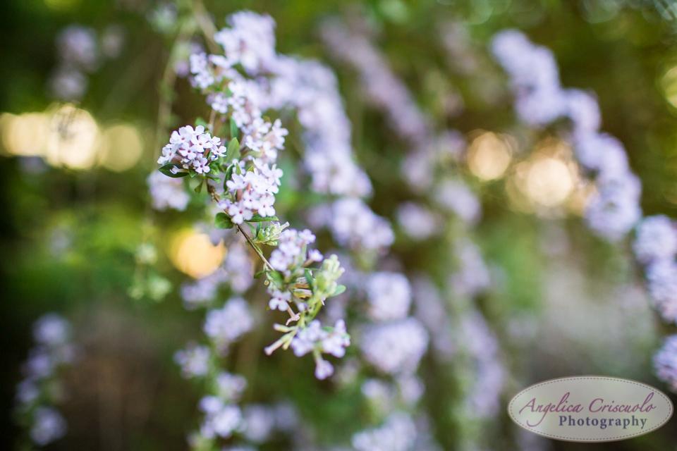 New_Jersey_Wedding_Photography_Villa_Ravello_web-667.jpg