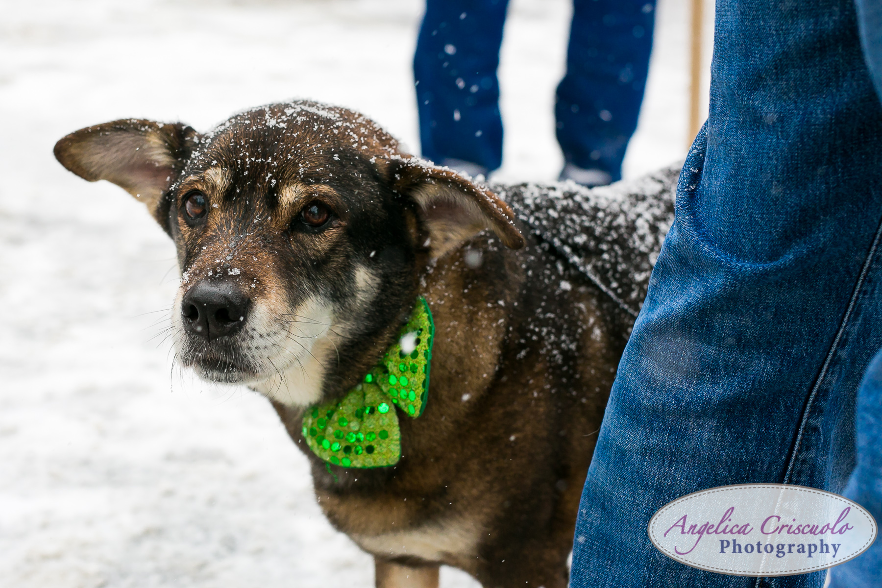 New-York-Photographer-SUDS-StPatricksDayParade-33