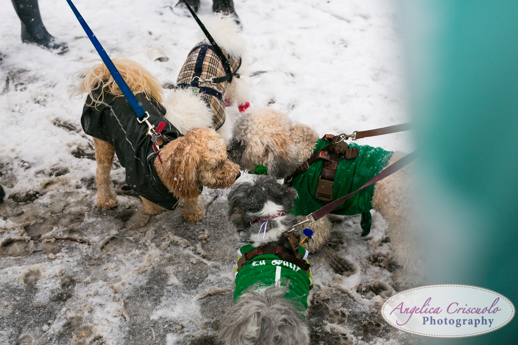New-York-Photographer-SUDS-StPatricksDayParade-34