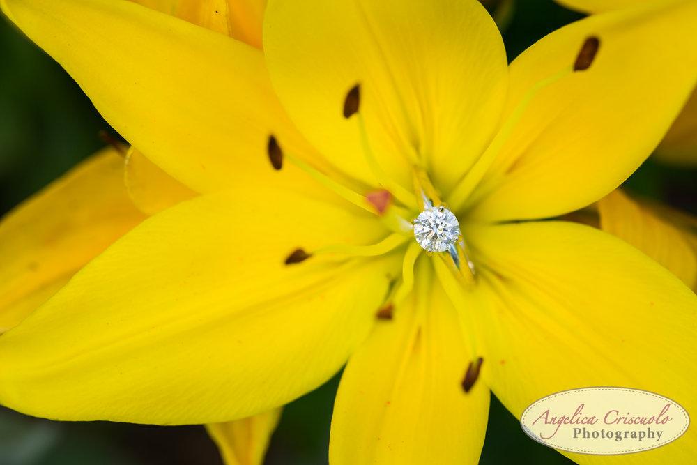 New-Jersey-Wedding-Photographer-Engagement-Photos-NJBotanical-Garden-0022.jpg