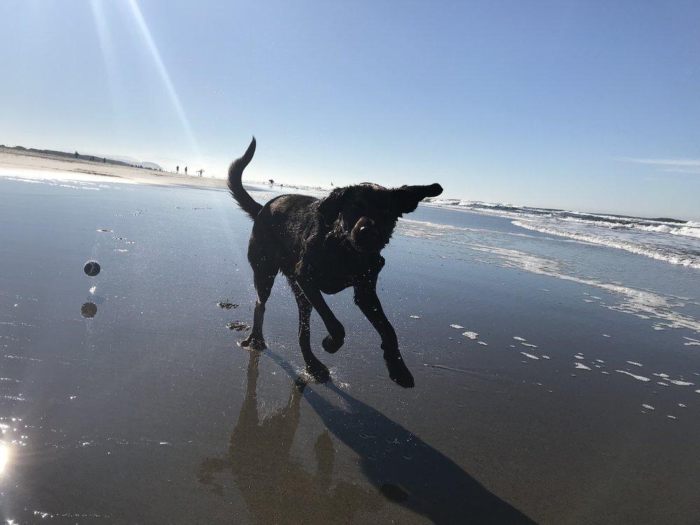 CU_dog_beach.jpg