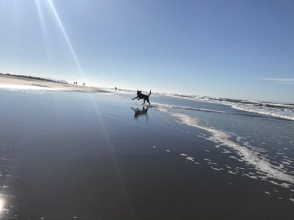 Dog_play_beach.jpg