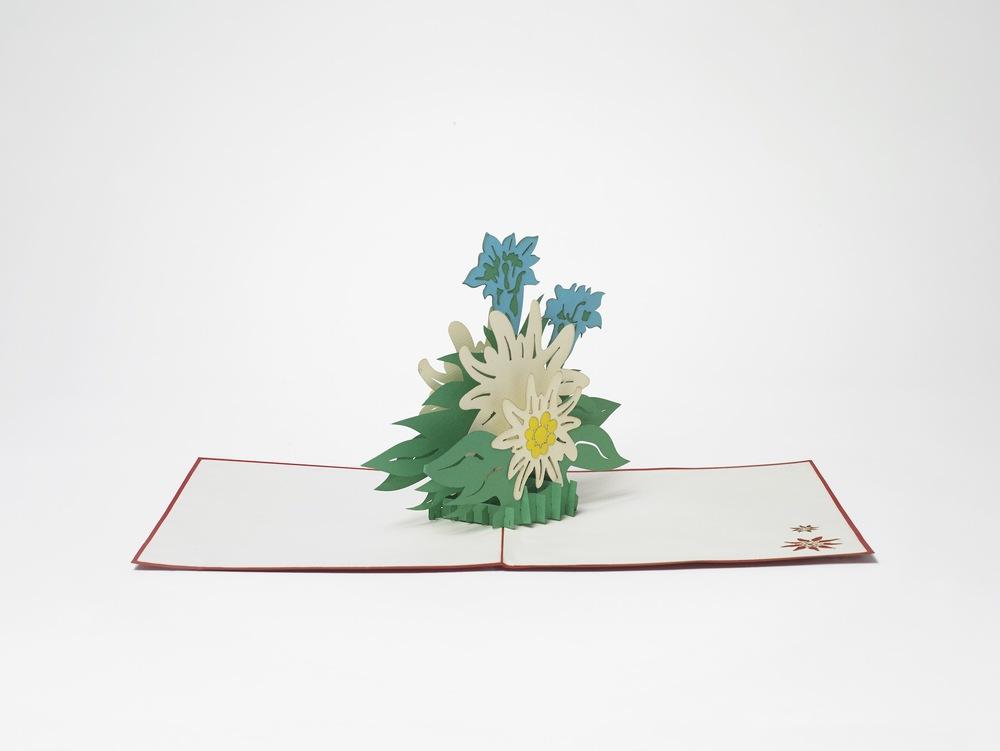 Edelweiss.jpeg