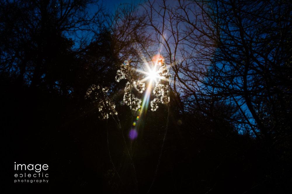 Sun-Weed