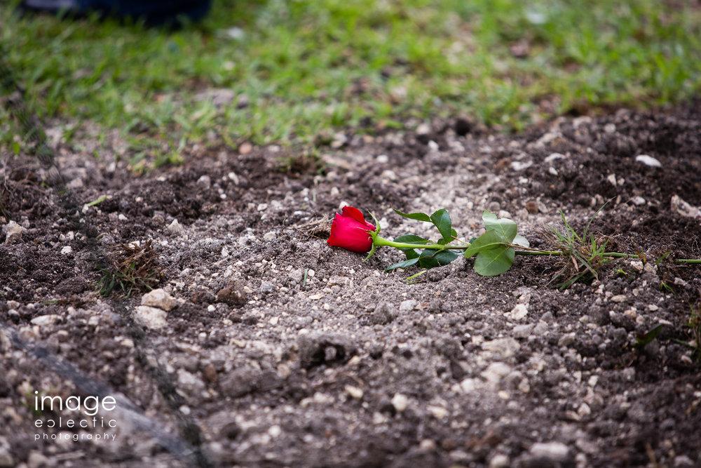 Grave Rose
