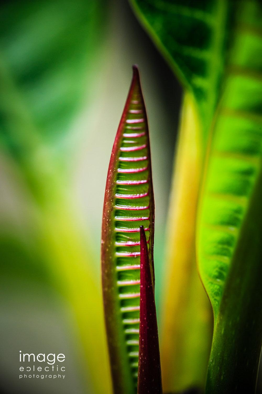 Proto-Leaves