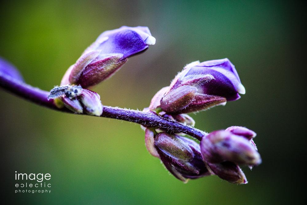 Purple Pods