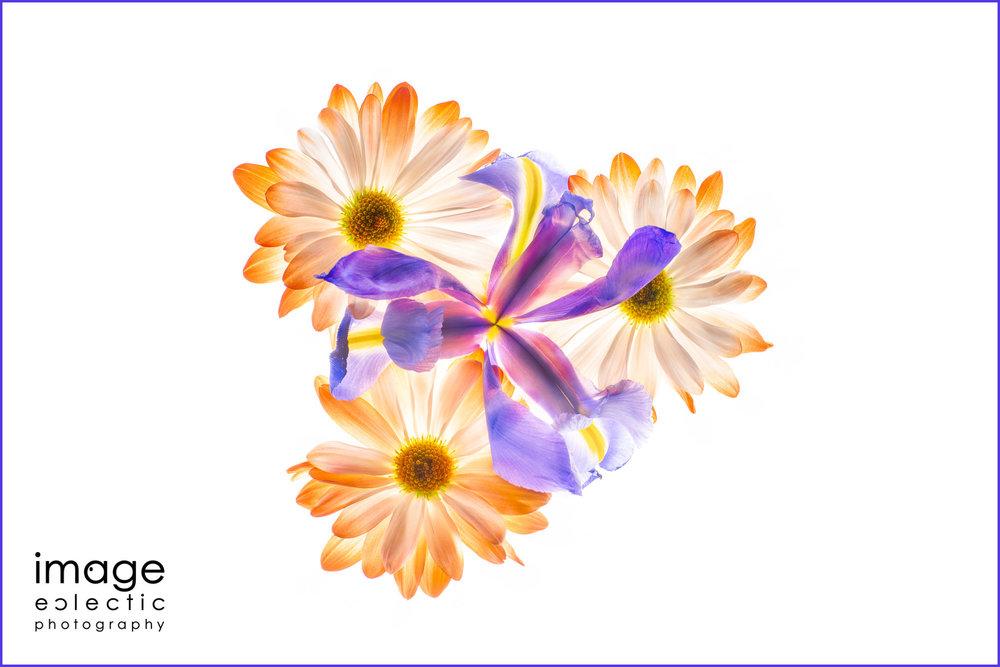 Iris & Daisies