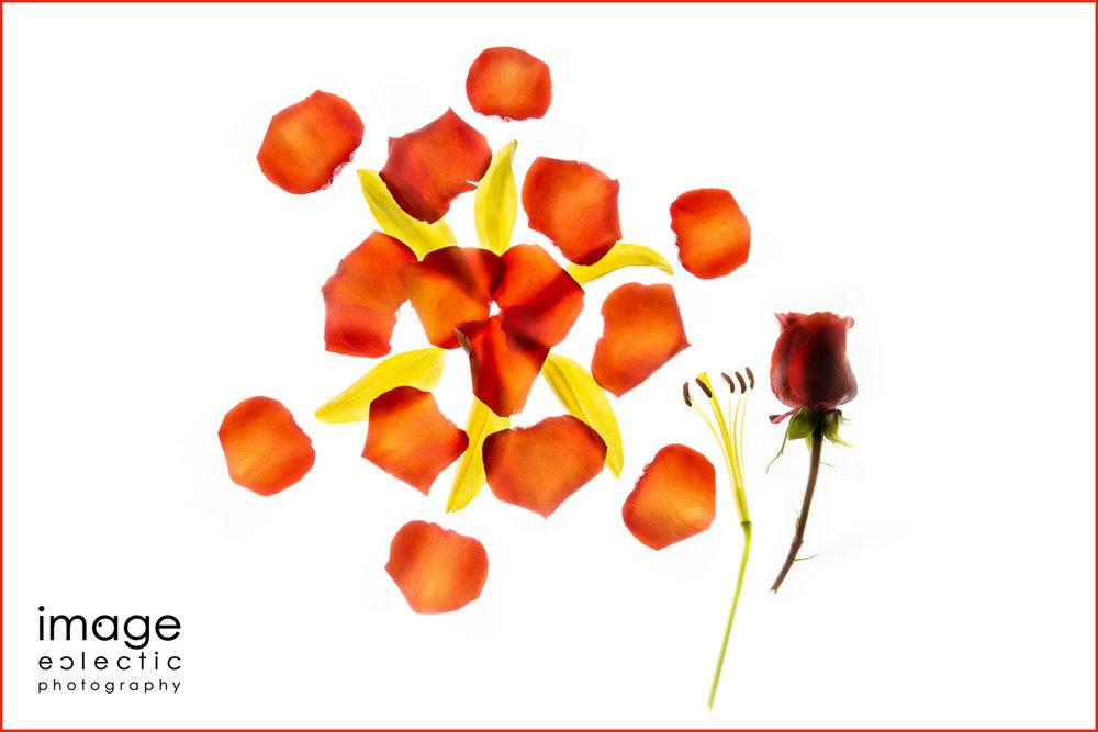 Tulip & Rose