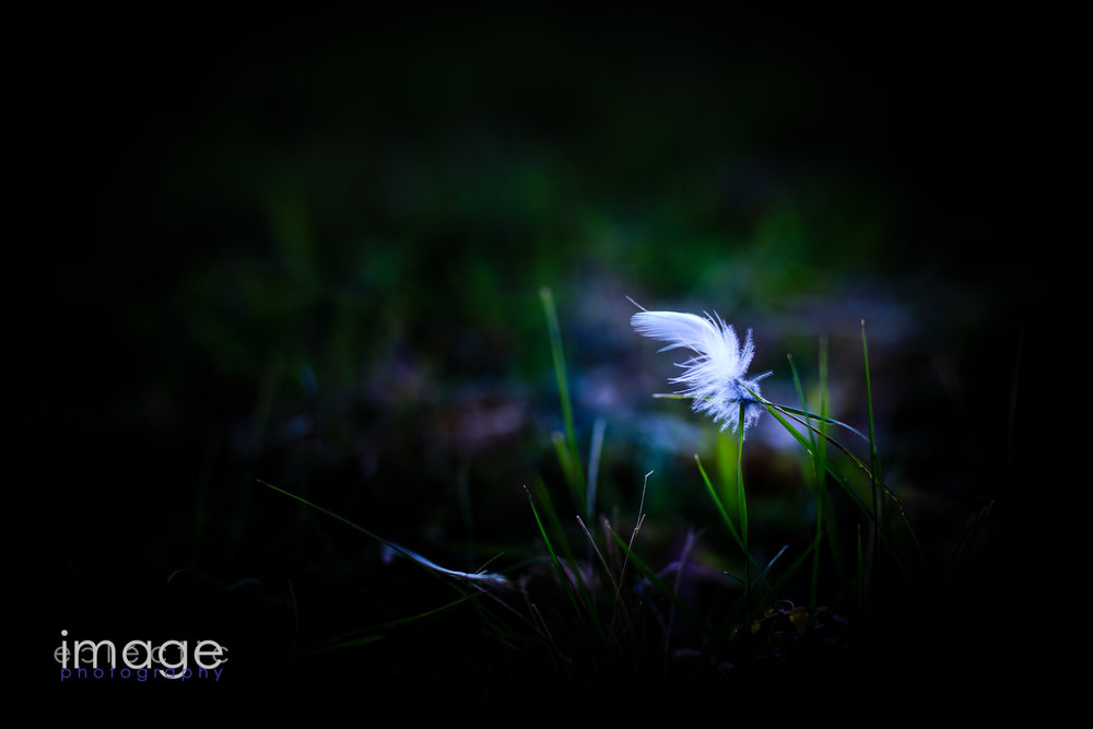 Feather in the Grass