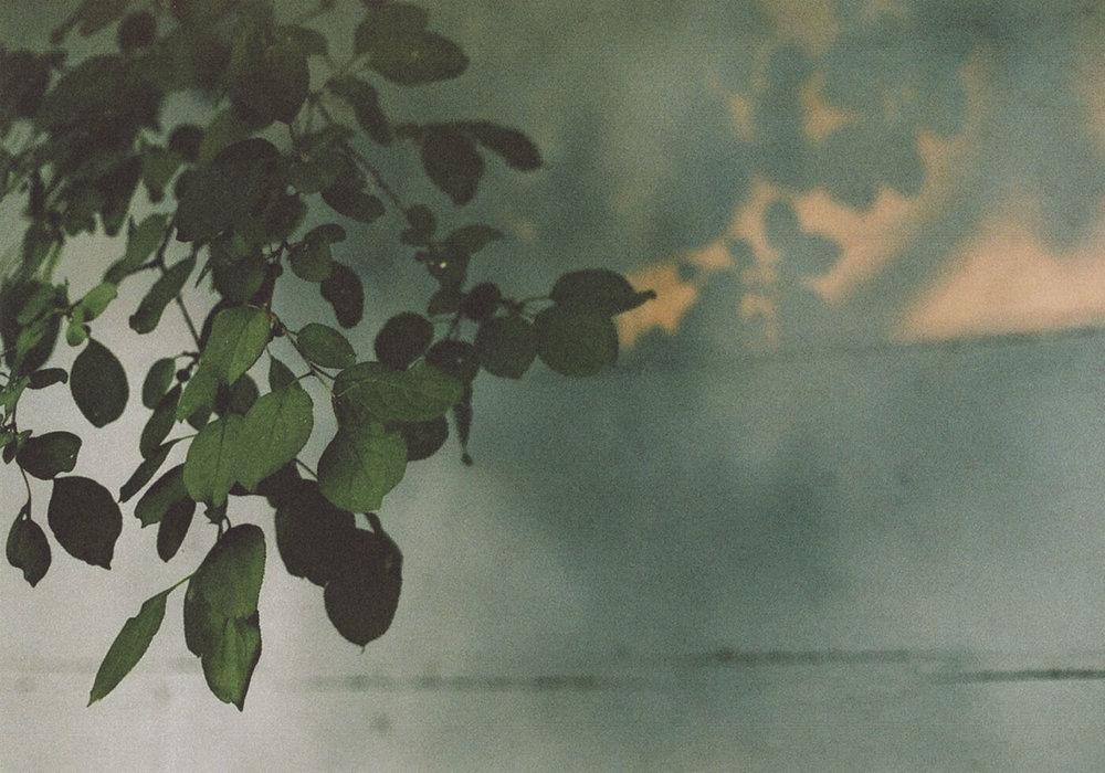 LeavesStart.jpg
