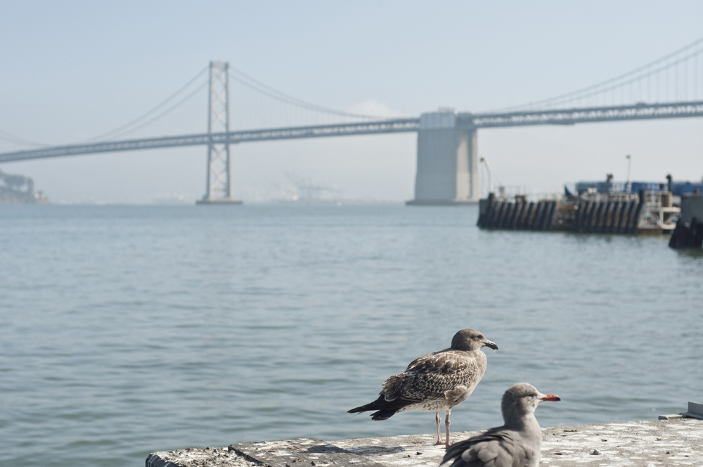 View of the Bay Bridge from the Ferry Building.