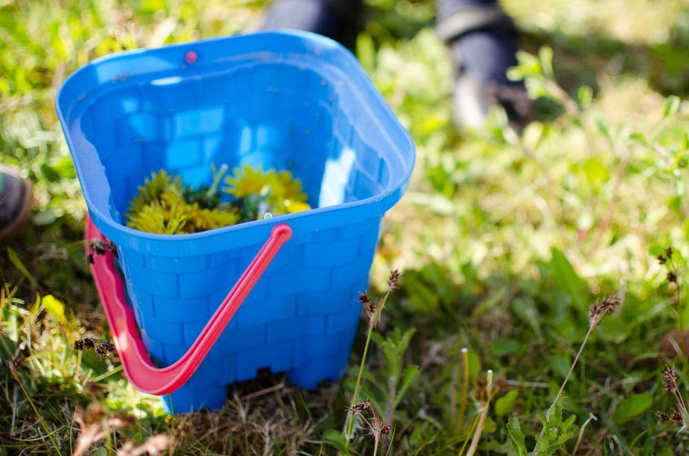 dandelion bucket