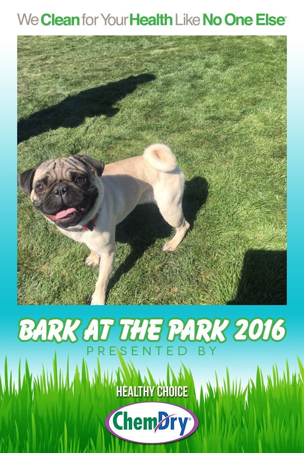 Bark_at_the_Park_2016_-_Part_2_-_20161002_-_02_28_55.jpg