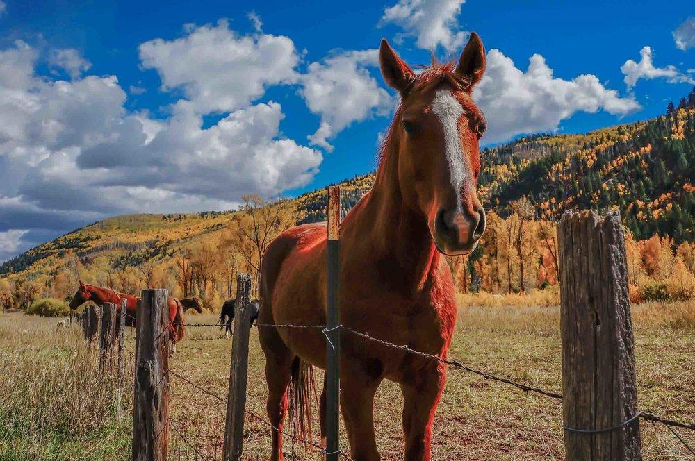 Fall_Horses_Hank_Blum_Photography.jpg