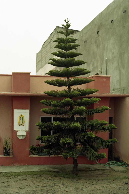 Evergreen, Baja California Sur, Mexico