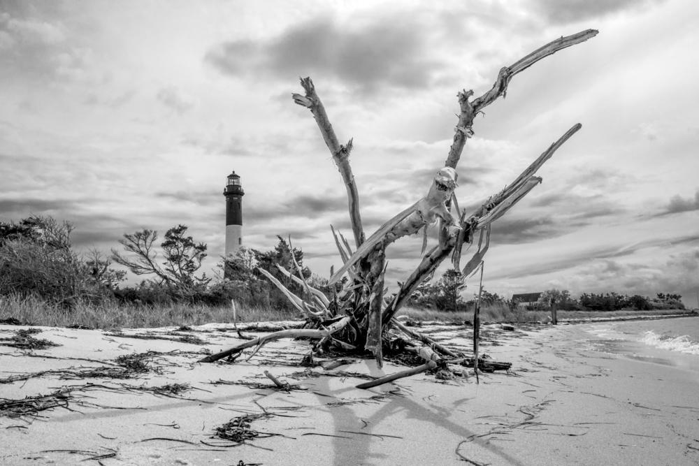 Fire_Island_Driftwood.jpg