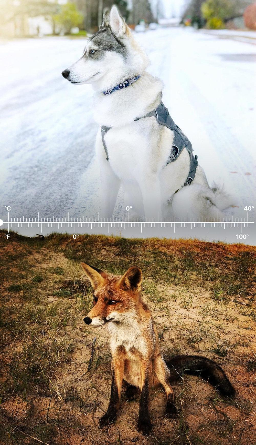 Temperatures_Story_r6b_03.jpg