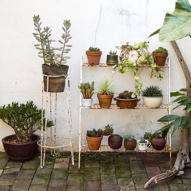 all of the succulents
