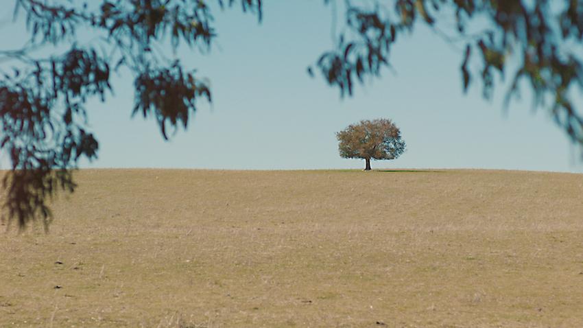 'wander' in hilltops region - HILLTOPS REGION NSW