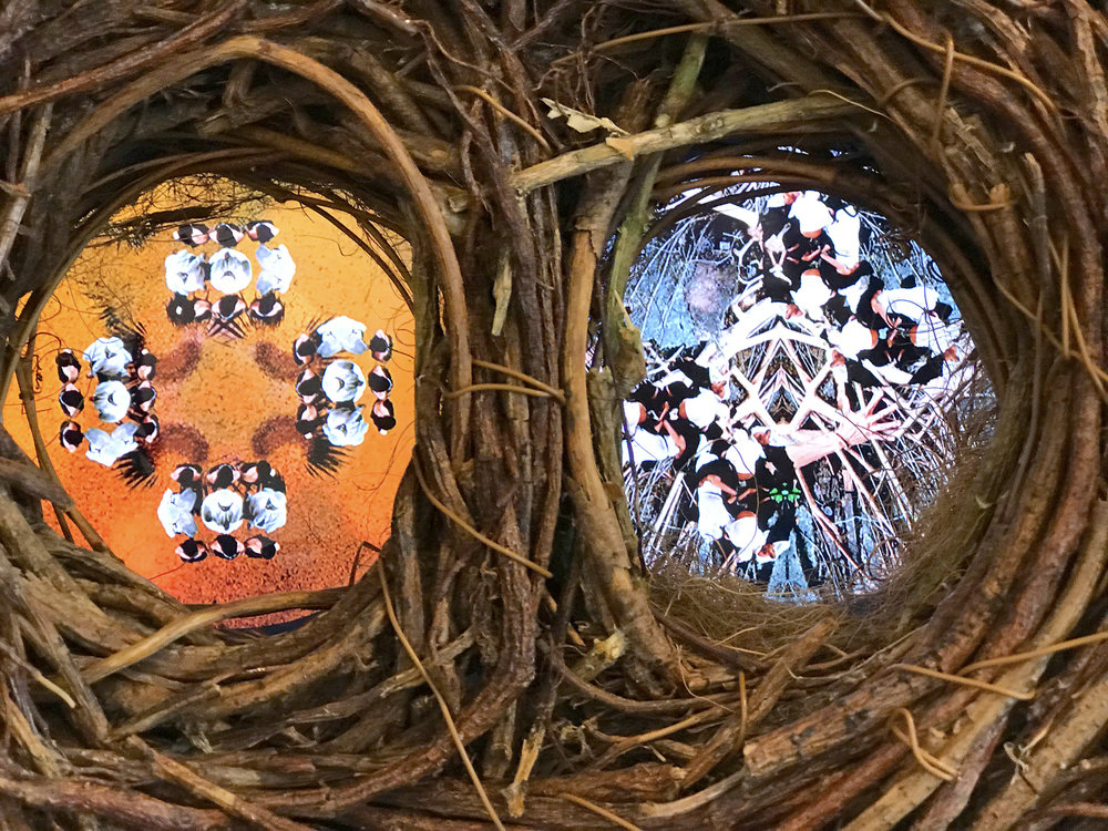 Nest_Roots_Detail.JPG