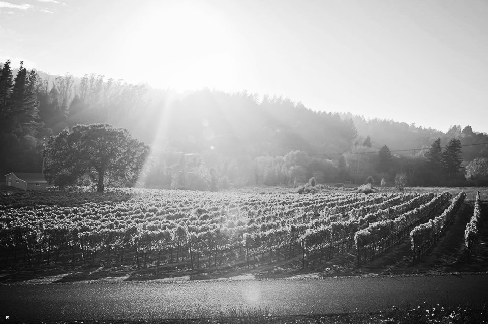 Sunset over Suacci Vineyard Sonoma Coast Post-Harvest 2014