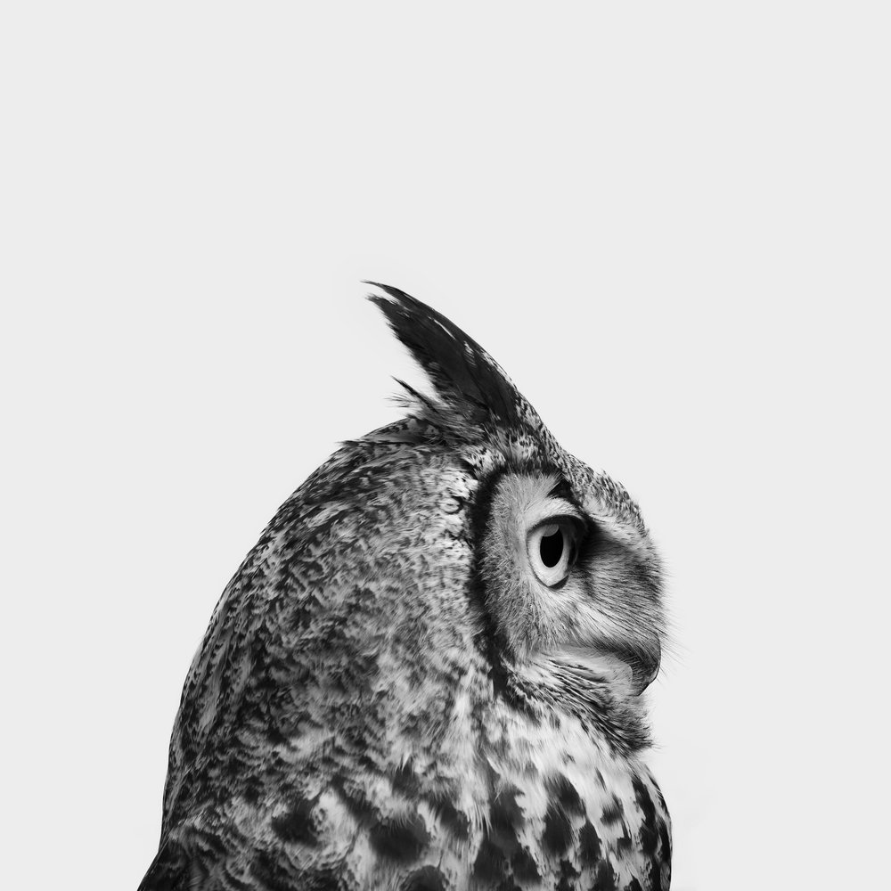 Owl 2 - Print (20x20).jpg