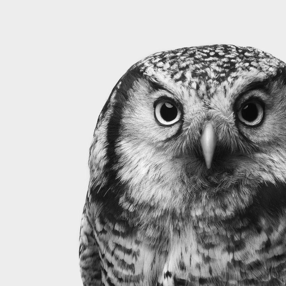 Owl 3 - Print (20x20).jpg