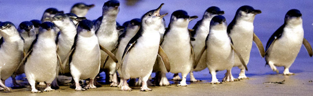 The Penguin Foundation Baneer for survey.jpg
