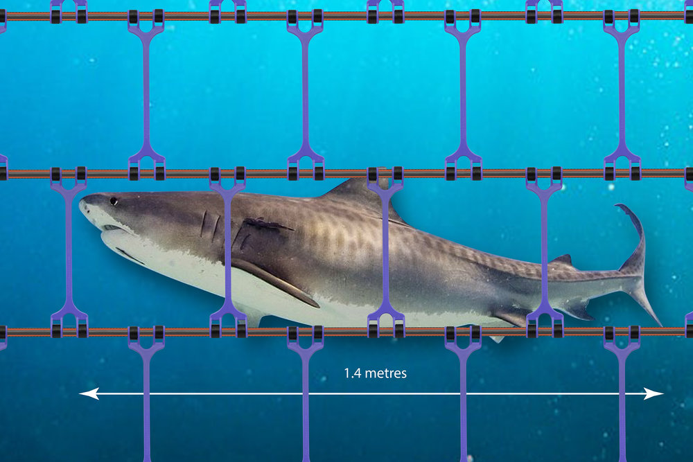TIGER SHARK BARRIER.jpg