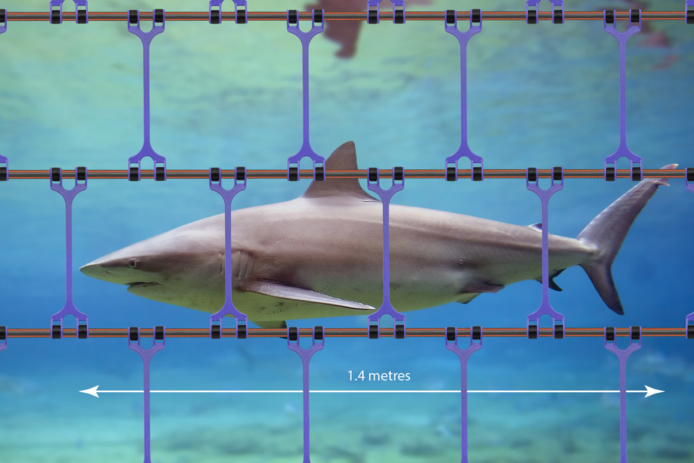 Bronze Whaler SHARK BARRIER.jpg
