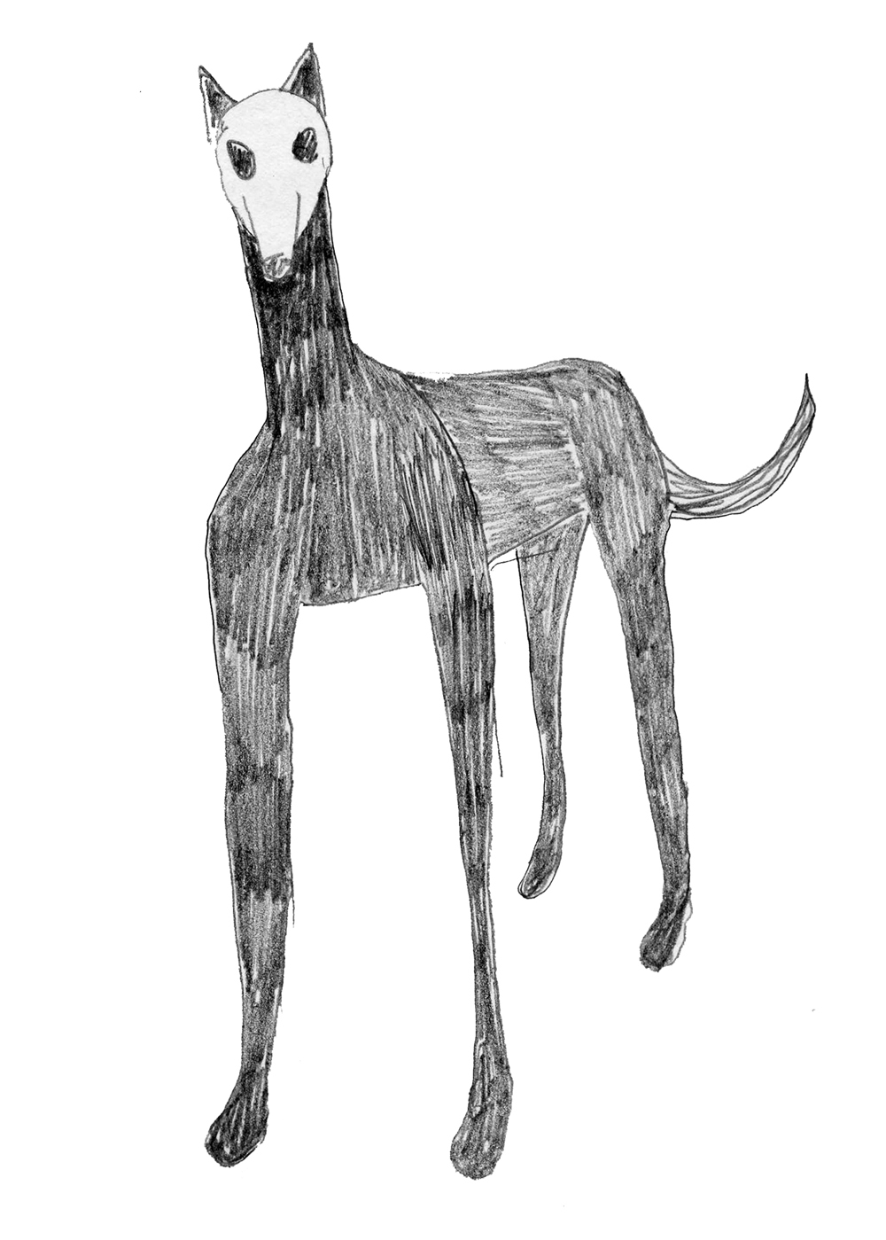 Night Dog