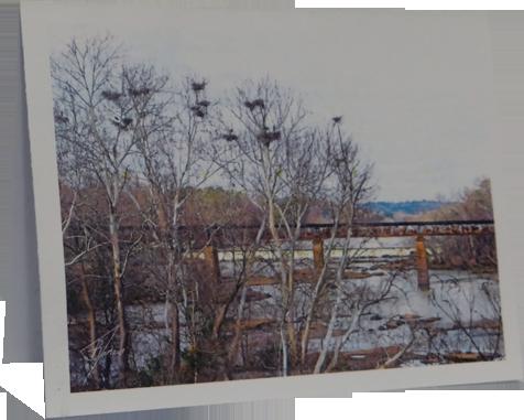 BirdsintheTrees.png