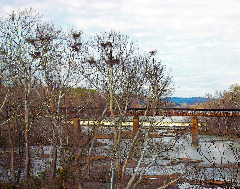 Birds in the Trees
