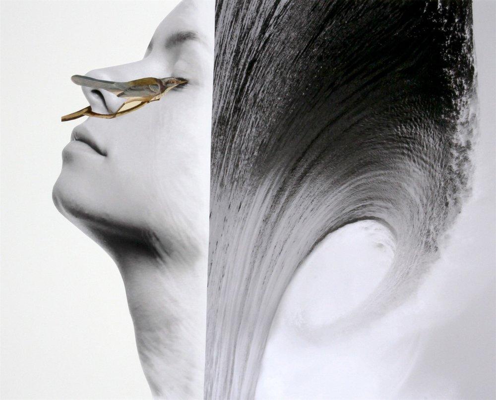 Bird, 2016