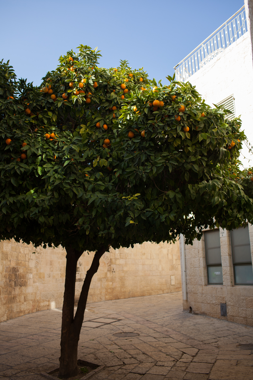 Israel2013resize-090.jpg
