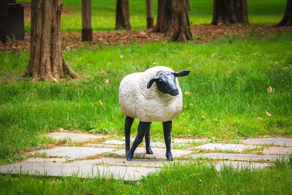 DEBORAH HORNBAKE_HADLYME SHEEP.jpg