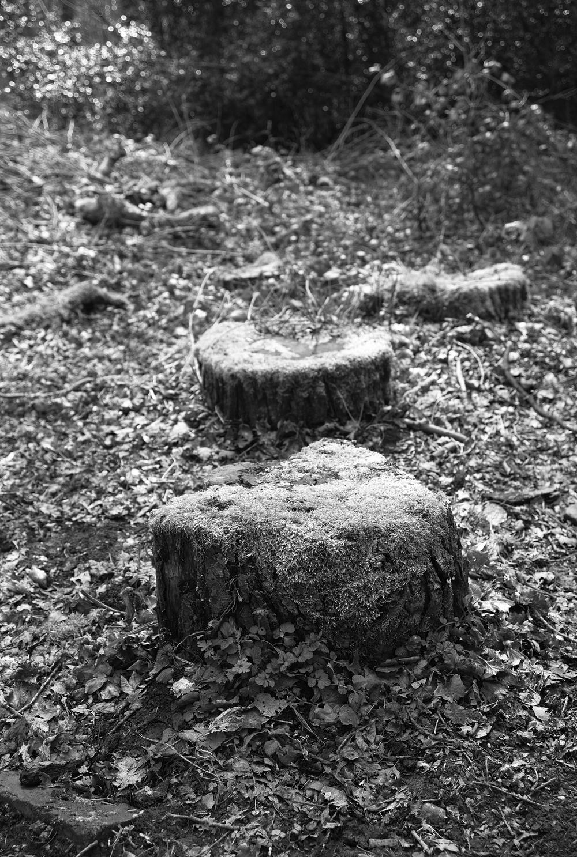 covered stump.jpg