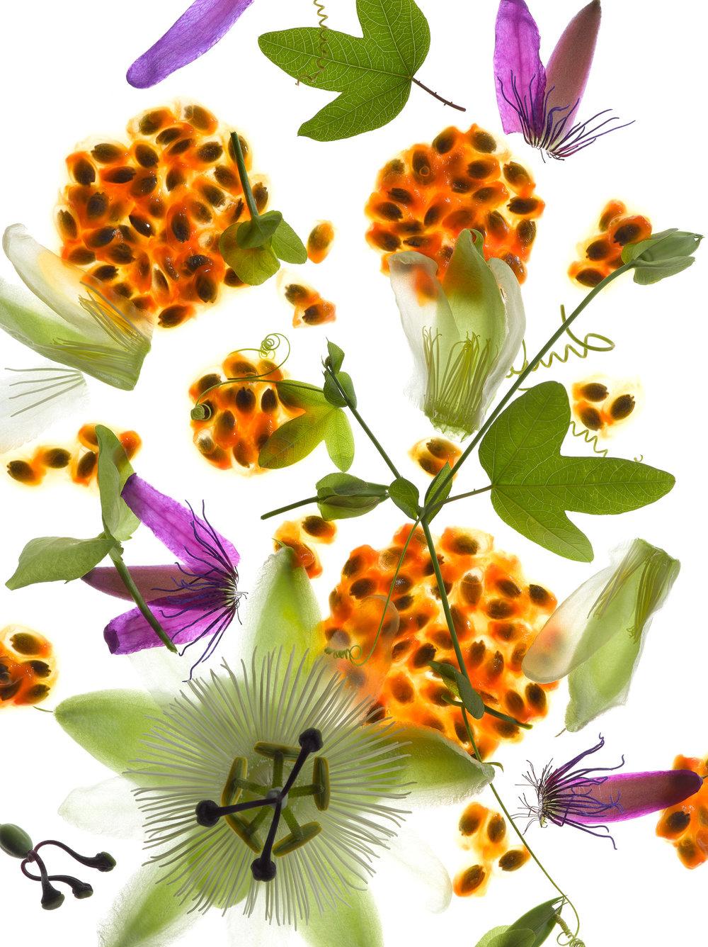 Flower & Passion