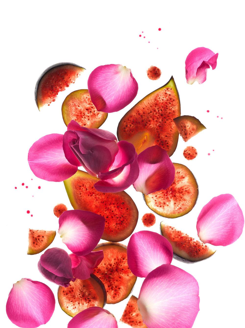 Fig & Rose