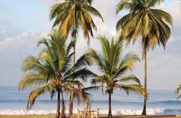 georgefarm-palm.jpg