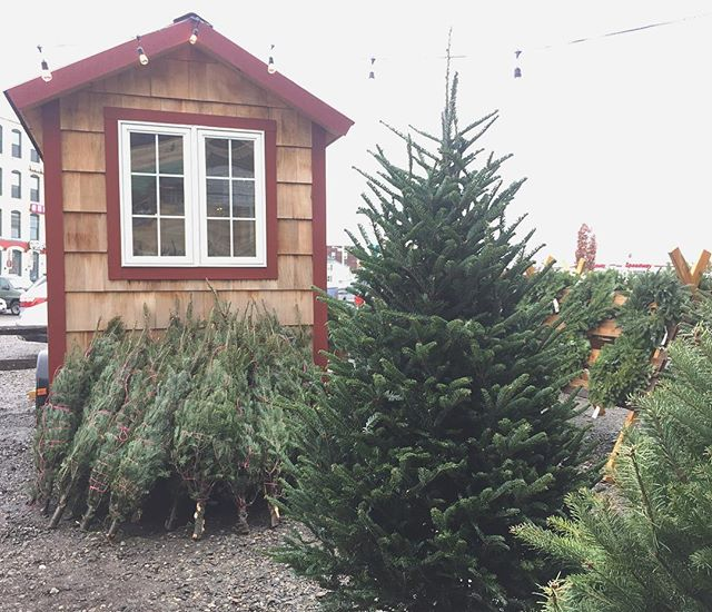 Location update! We're moving our tree lot up the street to Crompton's parking lot. It may not be quite as pretty as Crompton's patio but with tons of parking and easy access, it will be a lot easier for us to help you load up your tree and avoid construction obstacles. In fact we can tie it on your car for you while you pop down the hill to do some Christmas shopping @seedtostem  @shopcrompton @birchalley @bedlambookcafe @birchtreebreadcompany