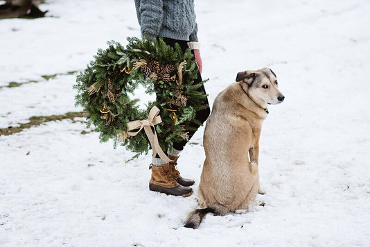 Bandit doesn't visit the tree lot often these days. He prefers to lounge next to the wood stove and follow deer tracks around the farm. But the first few years he'd be there with us every day dragging the table top trees around by the stump and selling trees better than we'll ever be able to. 📷: @paulette_griswold  #christmasinnewengland #farmdog #wreath #wreathsofinstagram #countrychristmas #countryliving