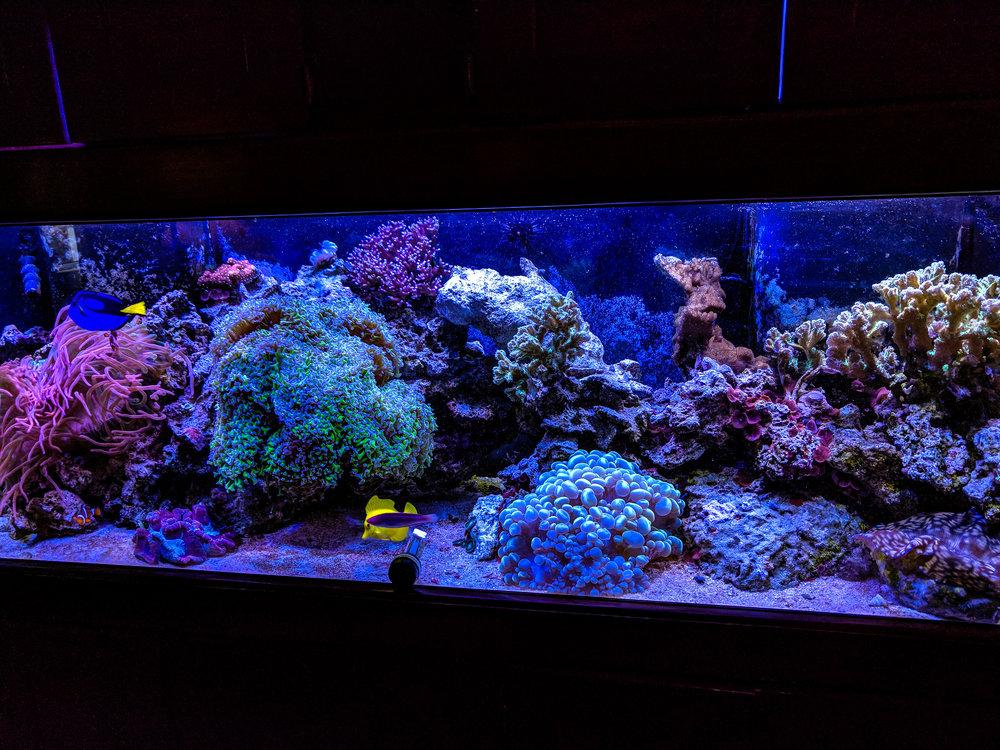 Tank 8- 2019.jpg