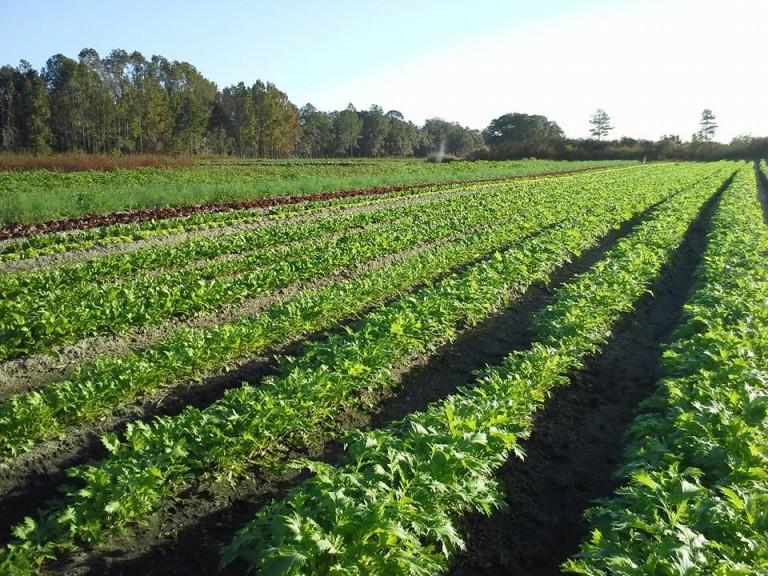 Farm-Frog-Song-768x576.jpg