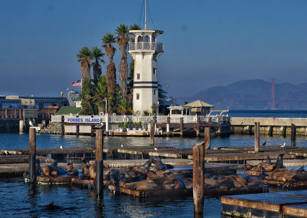 Sea Lions basking in the sun on Pier 39 K-dock off San Francisco Bay.